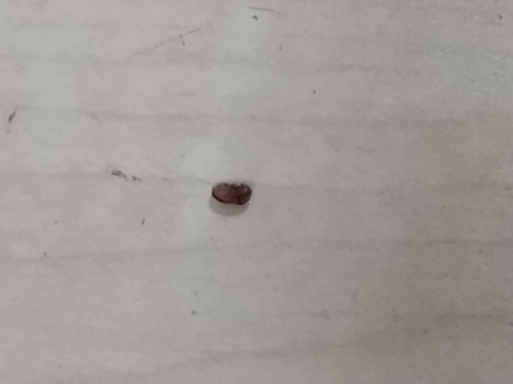 最近自宅でこのような虫がよく出てきます。 刺したりするのでしょうか?