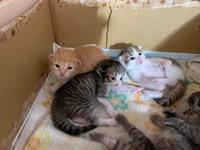 この猫の赤ちゃんの種類わかる方いますか?