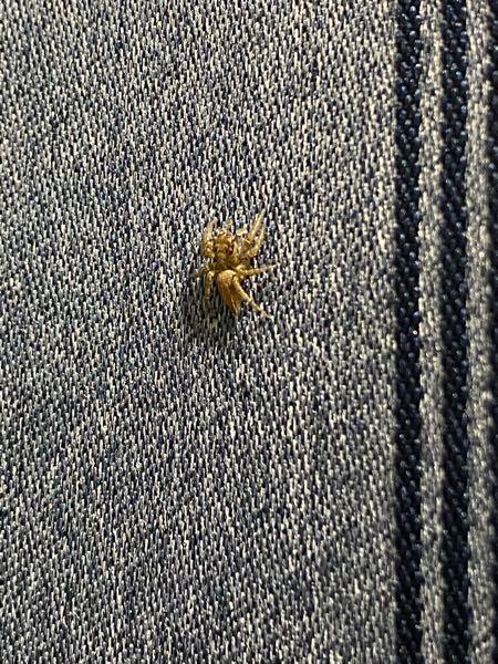 家にこんな蜘蛛がいたんですけどなんていう種類ですか?