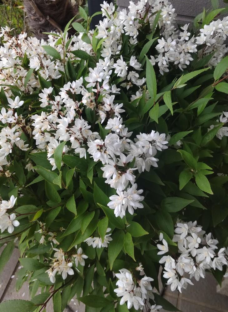 この花の名前は何でしょうか?