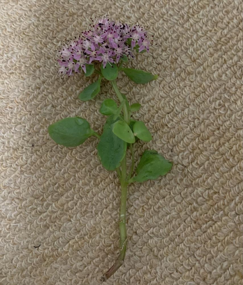 この植物の名前分かりますか ️