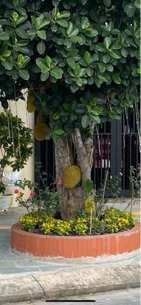 この木の実はなんですか?たべれますか?