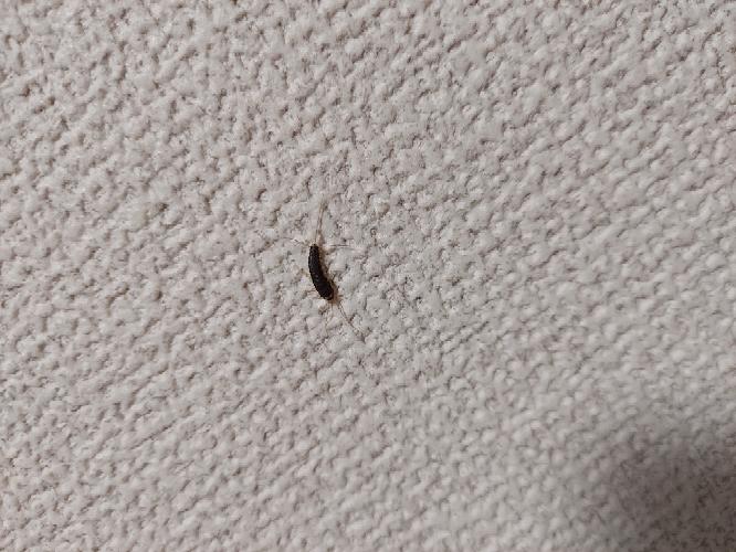 この虫なんですか? 家におってめっちゃキモイんですけど…