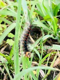このニコちゃんマークみたいな顔をした幼虫の名前を教えて下さい! よろしくお願い致します☆