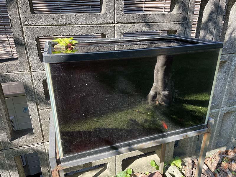 60cm水槽を庭において金魚を数匹飼っています。ホテイソウを一株いれています。 やや日陰の外においてあって、濾過装置もしていないので、日光の影響などでいつも水は薄い緑色の状態になっています。こまめにフンの掃除をしたり、貯めおきの雨水やカルキ抜きの水を使って適度な入れ替えも、ちょくちょくやっています。 その水槽が、朝起きたら、真っ黒(なんともいえないとてもても濃い色で、茶と緑と赤を混ぜたような黒色)で、金魚が見えないぐらいになっていました。 実は、この季節ぐらいに、ある日突然そうなるということが、毎年あるように思います。 起きた時の対処としては、半分ほどの水換えを繰り返していくということにしています。この現象で金魚が死んだりしたことはありません。 なぜこういうことが起きるのでしょうか。なにか対策やすべきことなどあるでしょうか?詳しい方がいらっしゃったら教えてください。 写真をのせます。普段は中が透き通って見えるのですが、あまりに黒すぎて、鏡のように反射するほどになっています。