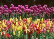 以前に京都植物園で撮りました。写真上部の花はギガンチュームと判りましたが、下部に並んでいる花の名前を教えて下さい。