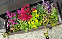 右下と左下の花の名前を教えて下さい。(花?)そもそも花が咲く植物ですか?