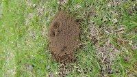 この巣は何という虫の巣ですか? 公園の芝生にアリの巣のような巣がいくつもありました。 こんもり土が盛られてアリの穴より少しだけ太い気がします。 アリの巣と思って観察していたらミツバチみたいなアブみたいな虫が出入りしていたのですが、名前がわかりません。 ご存知の方いらっしゃいましたら教えて下さい。