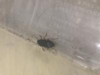 プランターの中にこんな虫が居たんですけど、何か教えて欲しいです