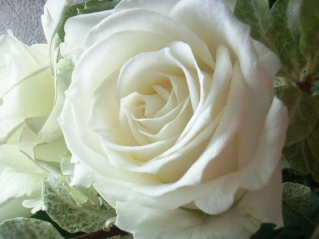 本日はローズの日です。 薔薇のお好きな方は何色が好きですか?