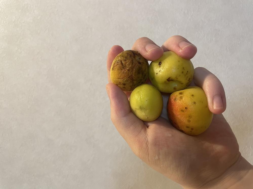 梅シロップを作ろうと思って梅を買ったのですが、この状態の梅でも大丈夫でしょうか?