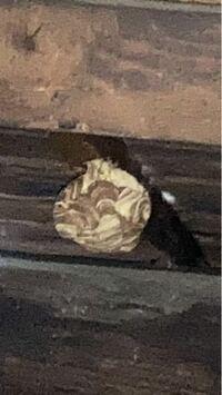蜂の巣ですが、これはなに蜂の巣でしょうか?大きさはソフトボールぐらいですが自分で駆除できますか?