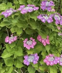 この花の名前教えてください!