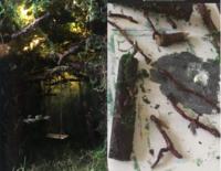 ジオラマを学校で作るのですが森というか木を使いたくて色々調べてるのですが下の方の写真で使われているのは本物の木(枝)ではないですよね? このような感じに出来ればしたいのですがジオラマやミニチュアのようなものを作ったことがないので………教えて欲しいです