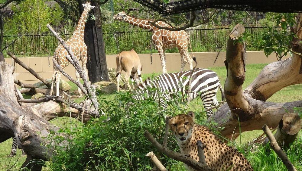 シニアの人は子供の頃に動物園に行って どんな動物がお気に入りでしたか?