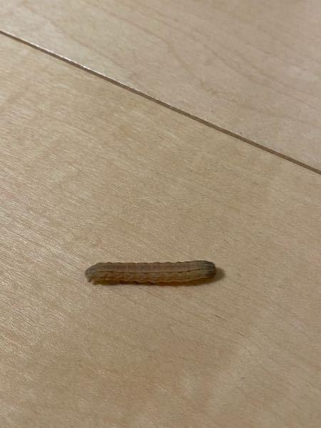 この子なんて虫?