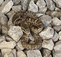 この蛇の種類を教えてください!