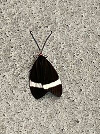 この蛾は毒を持っているでしょうか?
