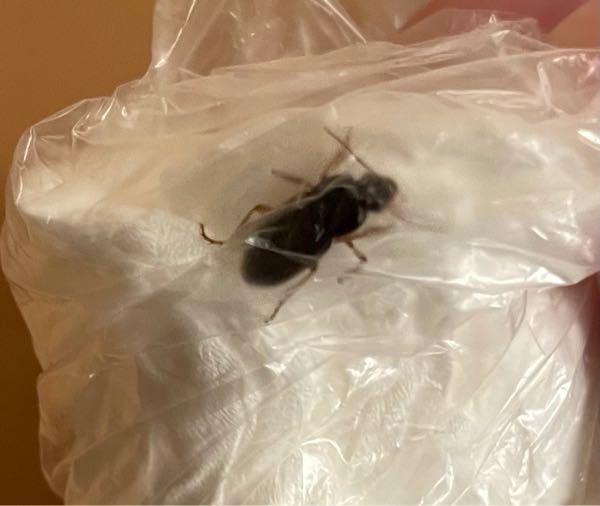 虫 閲覧注意 家にこんな虫が2回くらいでてきたんですが、 なんの虫か分かる方いますか?