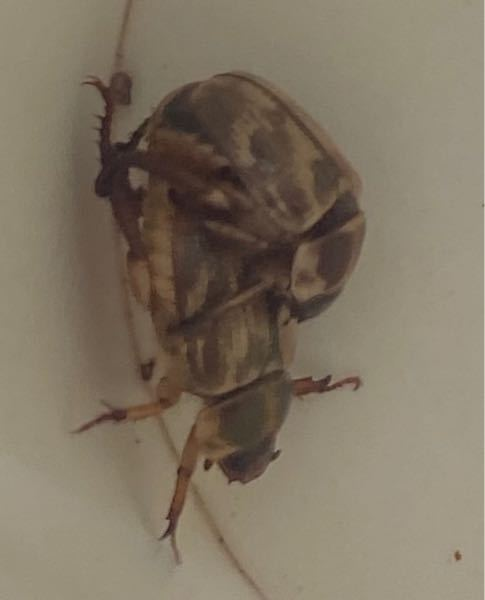 この虫は何ですか?