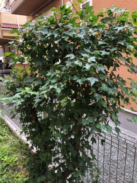 この植物は何という名でしょうか? どんどん育っていきますが、放置しても大丈夫でしょうか?