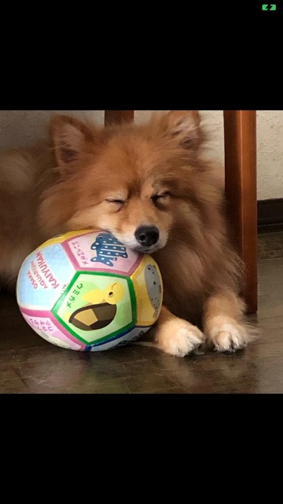 みんとという名前の犬です.最近太ってます.やせる方法を教えてください