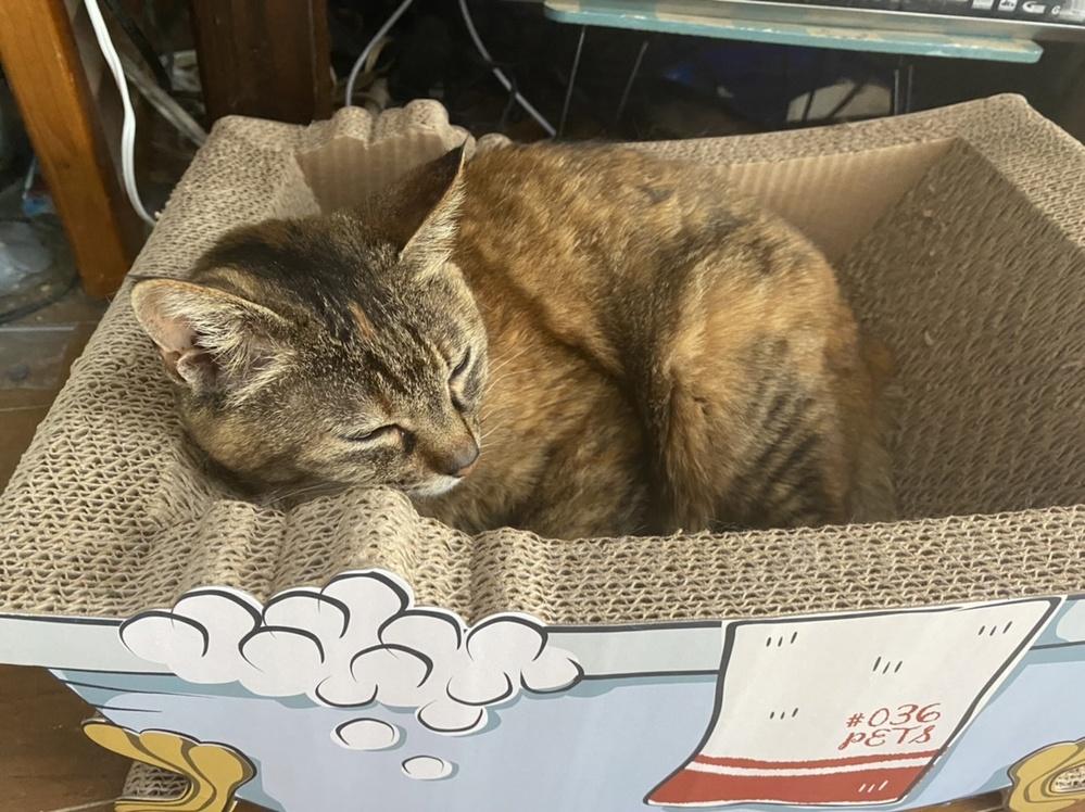 占っていただきたいです。 先日家出した猫ちゃんは帰ってくるでしょうか? 心配で心配で頭がおかしくなりそうです。 どなたでもどんな占いでも構わないのでお願い致します。