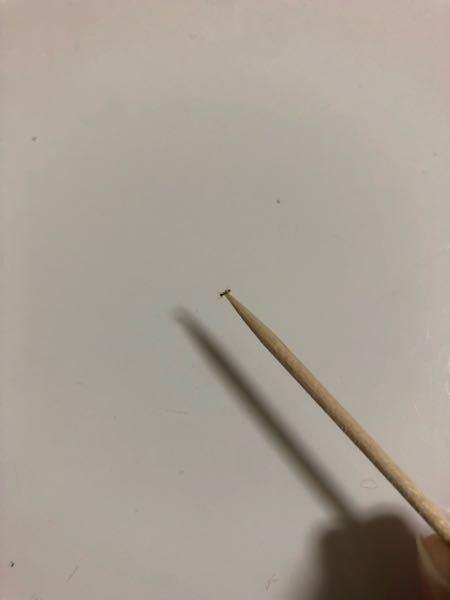 この蟻の種類を教えてください! 先日からキッチンに大量発生し アリメツで対処中です。 働きアリ?がアリメツを運んで2日目 ひとまわり小さなアリが 数匹だけ出てきました。 ちなみに写真はアリメツを吸った後です。 どなたがお詳しい方ご教示ください。