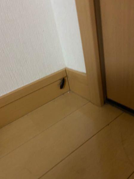 これってゴキブリですよね??