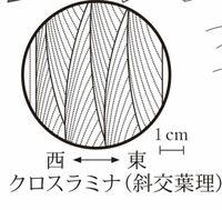地学のクロスラミナの上下が判定できません 解説には、曲線が凸になっている方が下側なので西側が古いとありました。 どのように見分けるのでしょうか? 地学分かる方よろしくお願いします