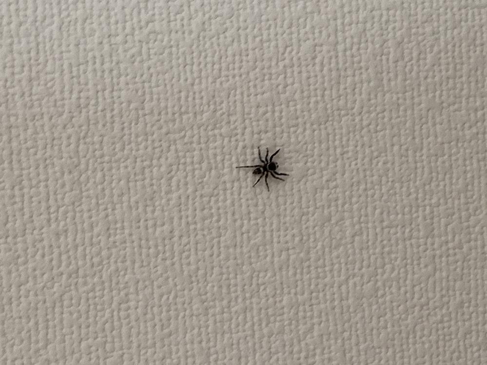 この蜘蛛の種類を教えてください