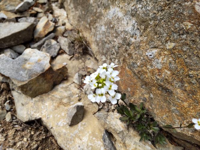 何と言うお花でしょうか。甲斐駒ヶ岳です。