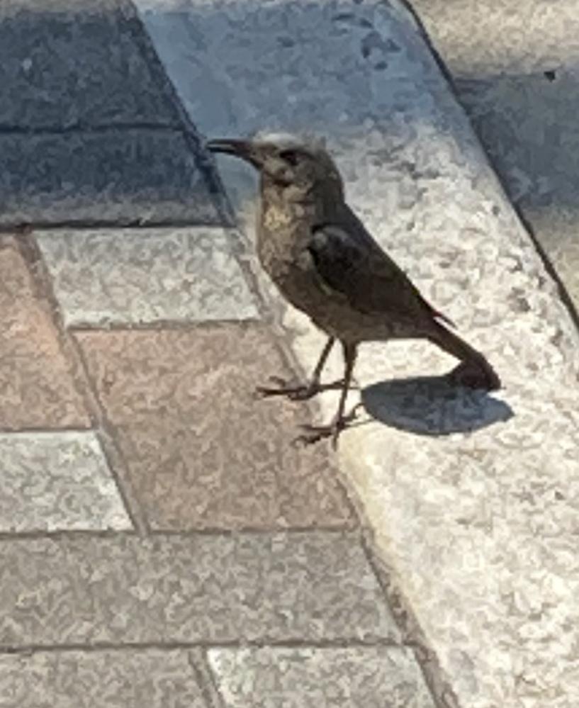 この鳥はなんですか? 教えてください。