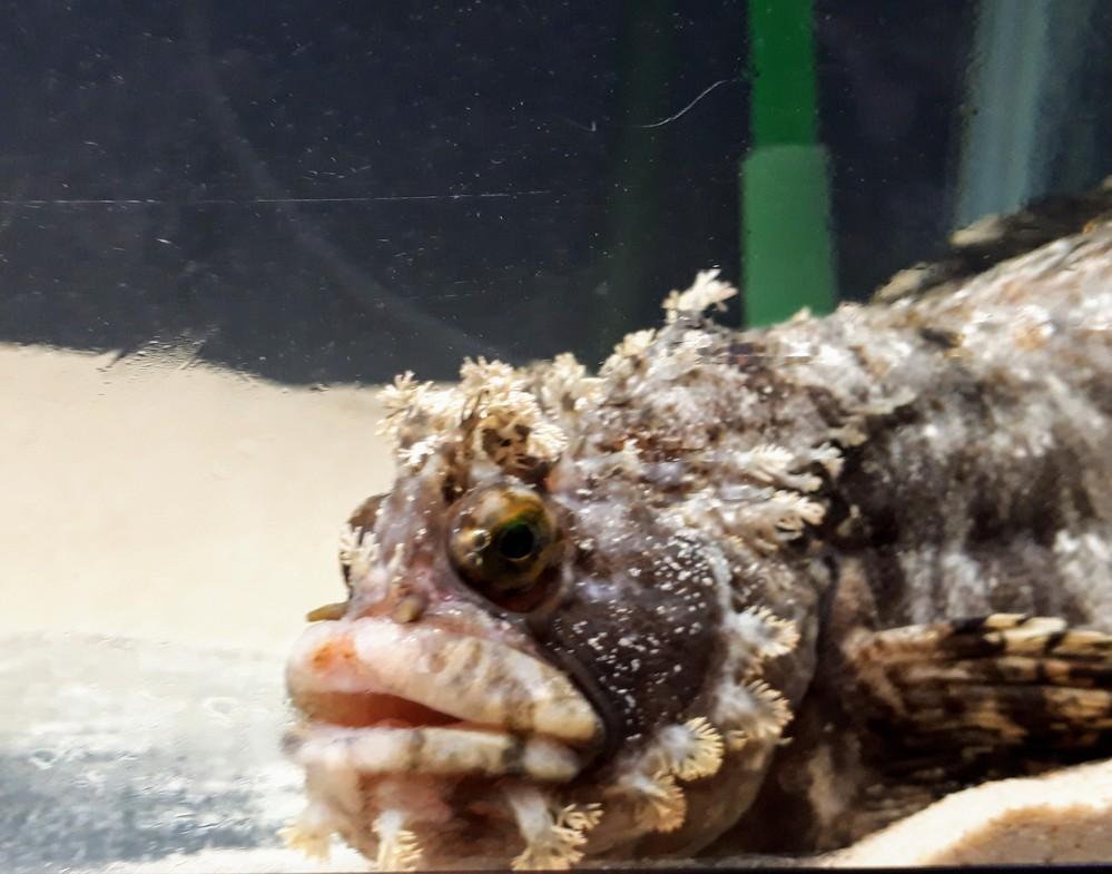 この魚の名前が分からないので、教えていただけますか。 種までは特定できないかもしれませんが、近い種類の魚だけでも知りたいです…