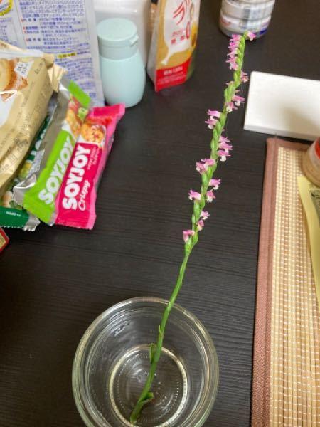このお花の名前わかりますか? らせん状に咲いてる花 超可愛いですよね。小さい時から好きで 今日、散歩中にたまたま見つけました。 ホッコリします。 よろしくお願いします。