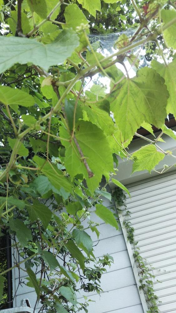 写真の木の葉から、なんの木かわかる方、教えていただけますでしょうか。