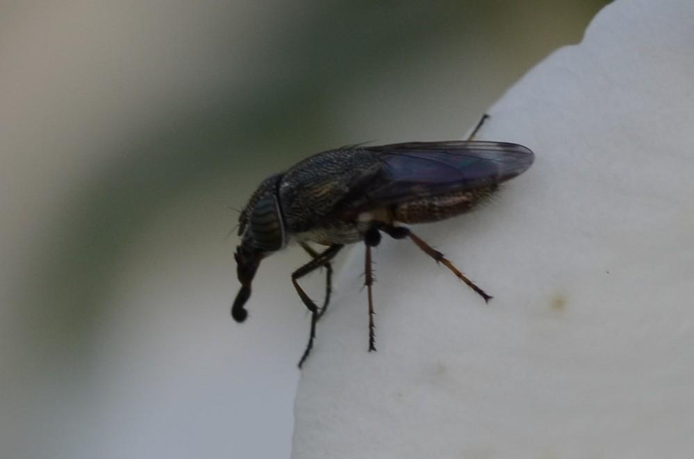 この昆虫の名前を教えて下さい。よろしくお願いいたします。