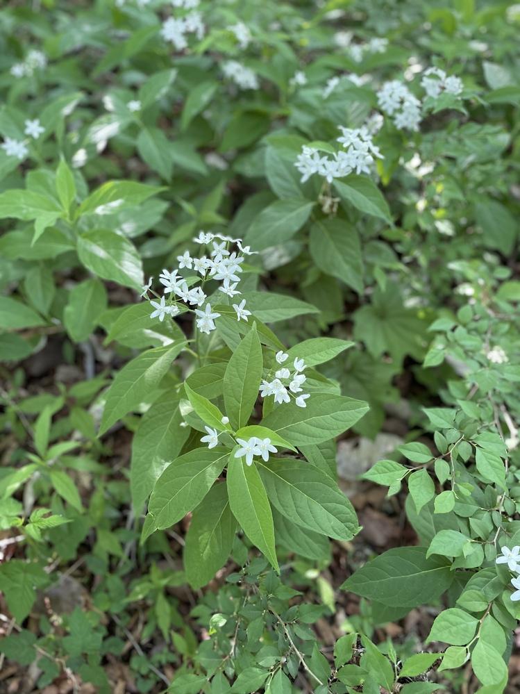 この写真の花の名前わかる方いらっしゃいますでしょうか? 群馬県の水沢山で見ました。