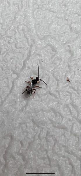 この虫が玄関に沢山います 原因がわからず、 外から入ってきたと思っていいでしょうか? 巣など作られていたらと心配してます。