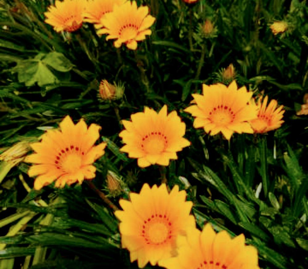 この花の名を教えていただけませんでしょうか?