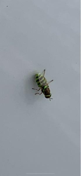 この虫は攻撃してきますか??