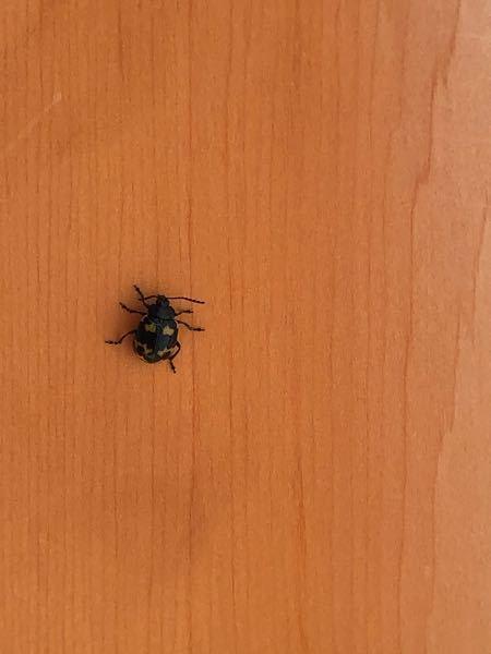 これは何という虫ですか?