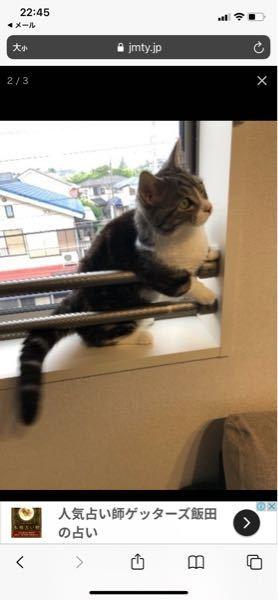 お世話になります。 このマンチカンは、 毛長の方でしょうか? またマンチカンは、 他の猫と比べると 毛が抜けやすいですか? よろしくお願いします。