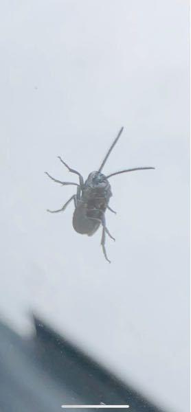 これって何ていう名前の虫ですか?