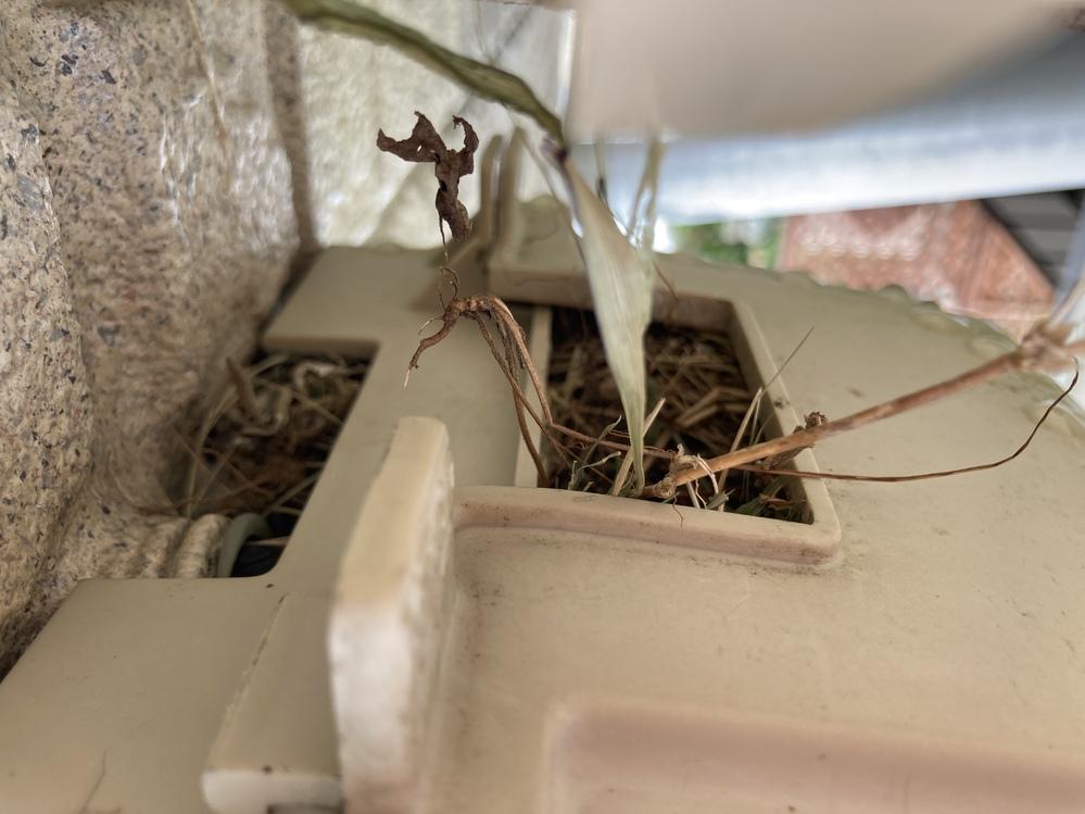 鳥の巣に詳しい方お願いします。 情報が少なく申し訳ないのですが、 電気メーターの上のボックスに鳥の巣を見つけました。 鳥の種類分かる方いましたら教えて下さい。 怖くてボックスを開ける事が出来ず画像の写真しか手がかりがありません。 犬が居るので外で遊ばせる時に菌などが心配です。 撤去した方がいい場合、撤去する時期など教えて頂きたいです。