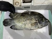 この魚は何という生の魚のでしょうか?