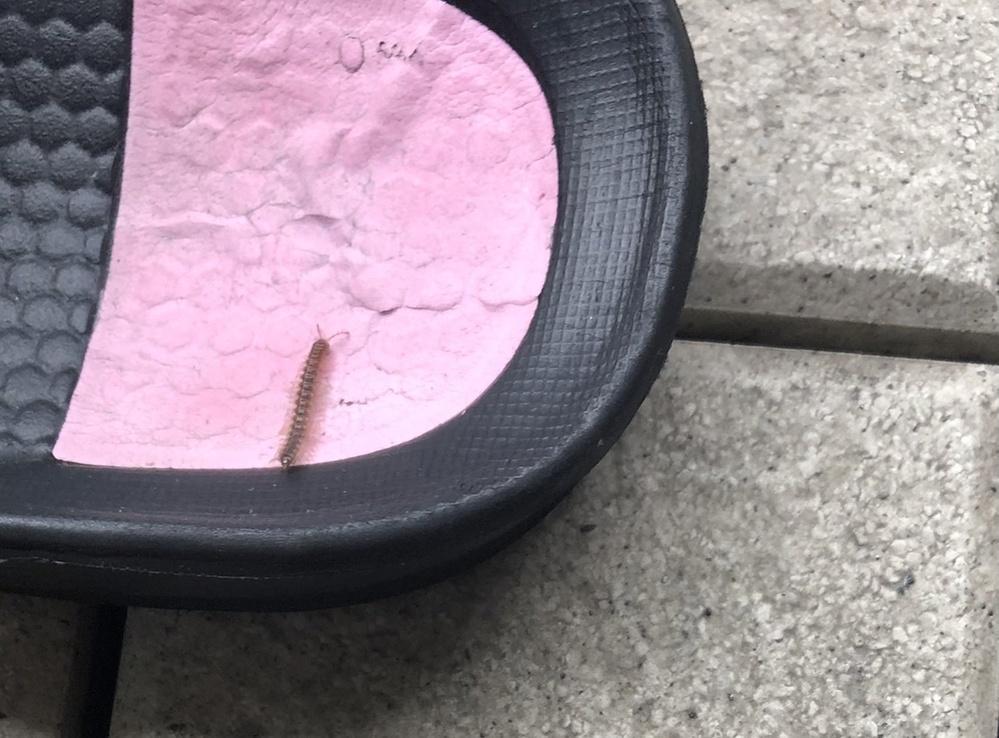 これは何という虫でしょうか? 毛虫くらいの速さで動いています。