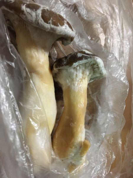 冷蔵庫に入れておいたエリンギがこのように白くなっていますが何でしょうか?キノコは水分が多いのでカビですか? 野菜室です。