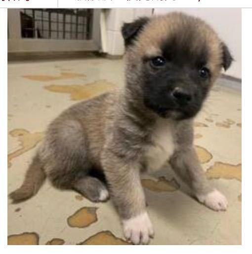 この犬の犬種はなんですか?将来、大きくなりますか
