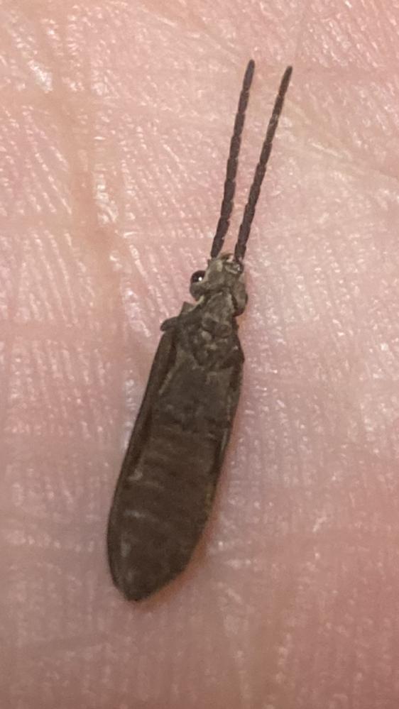 この昆虫名前わかりますでしょうか? 1枚しか載せれないのでひっくり返った写真のみです。